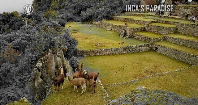 Tour fauna en el Valle Sagrado Machupicchu en Cusco