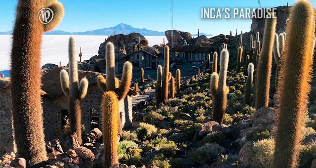 ISLA DEL PESCADO EN UYUNI - BOLIVIA